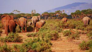 elephant 2668675 640 300x169 - Kenya drone laws
